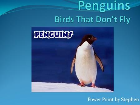 Power Point by Stephen. Introdution Speedy little blurs flying throgh the water they are penguins but penguins don't fly they waddle and when babys are.