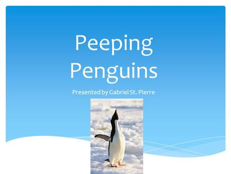 Peeping Penguins Presented by Gabriel St. Pierre.