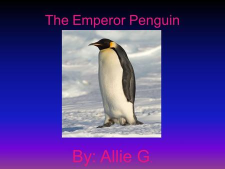 The Emperor Penguin By: Allie G.. General Information The Emperor Penguin is in the mammal group The scientific name is Aptenodytes forsteri The life.