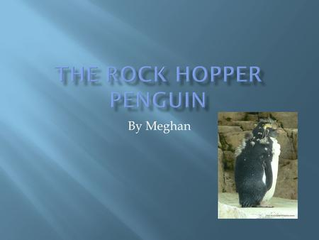 By Meghan.  The Rock hopper penguin lives on the islands north of Antarctica, from Chile to new Zealand.