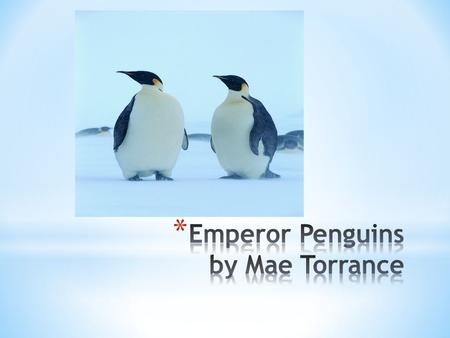 * The Emperor penguin is the biggest penguin. * Lives 20-50 years * Black, white, and yellow * Webbed feet and long beaks * Have flippers that help them.