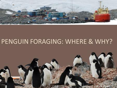 PENGUIN FORAGING: WHERE & WHY? * Lesson Plan PPT to use with students *