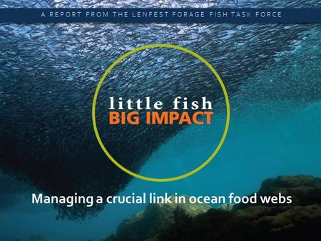 Little Fish, Big Impact  A SUMMARY OF NEW SCIENTIFIC ANALYSIS Managing a crucial link in ocean food webs A REPORT FROM THE LENFEST FORAGE FISH TASK FORCE.