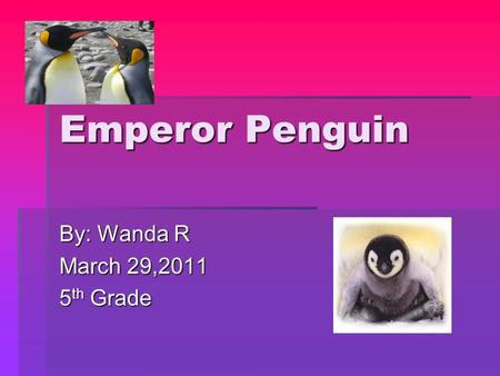 Emperor Penguin By: Wanda R March 29,2011 5 th Grade.