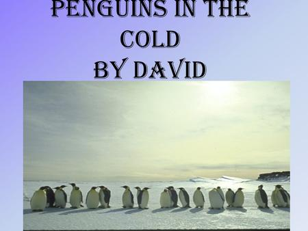 Penguins in the cold By David. Table of contents fun factfun fact.