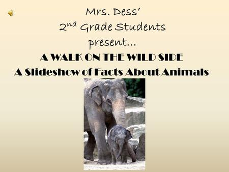 Mrs. Dess' 2 nd Grade Students present… A WALK ON THE WILD SIDE A Slideshow of Facts About Animals.