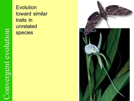 Convergent evolution Evolution toward similar traits in unrelated species.