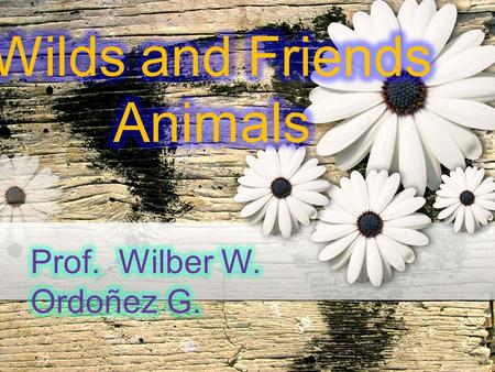 Wild or exotic animals are found in nature. Wild animals have lived for thousands and thousands of years without the direct influence of humans. They.
