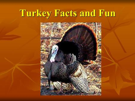 Turkey Facts and Fun. The Great American Turkey Debate! The Mostly true story of America's quest for a National Bird, by Joe Wos and Benjamin Franklin.
