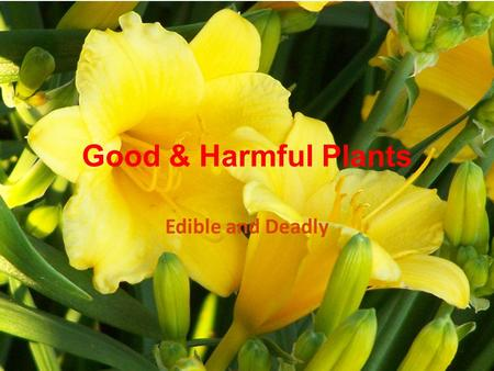 Good & Harmful Plants Edible and Deadly. Some Poisonous Plants 1.Oleander 2.Larkspur 3.Monkshood 4.Lily-of-the Valley 5. Iris 6.Foxglove 7.Bleeding Heart.
