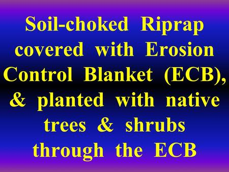 Soil-choked Riprap covered with Erosion Control Blanket (ECB), & planted with native trees & shrubs through the ECB.
