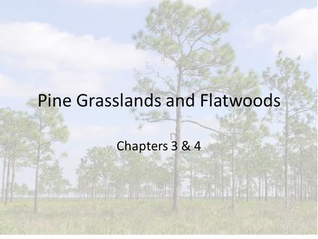 Pine Grasslands and Flatwoods Chapters 3 & 4. Pine Grasslands Pine ecosystems in uplands Once the dominant ecosystem in North and Central Florida (as.