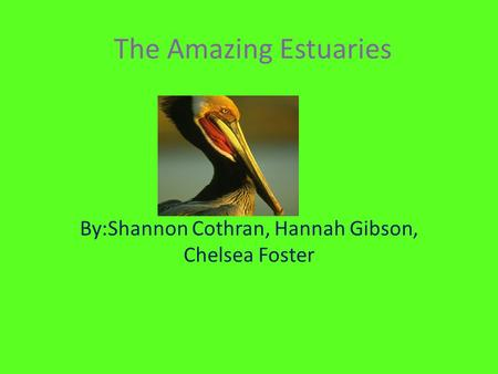 The Amazing Estuaries By:Shannon Cothran, Hannah Gibson, Chelsea Foster.