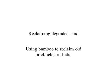 Reclaiming degraded land Using bamboo to reclaim old brickfields in India.