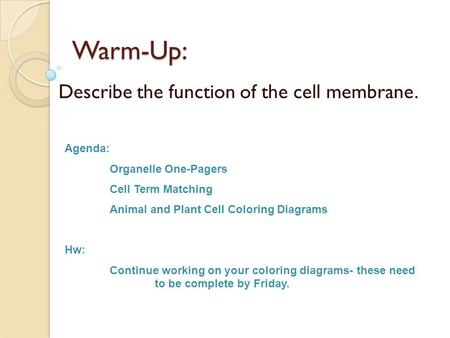 Warm-Up: Describe the function of the cell membrane. Agenda: Organelle One-Pagers Cell Term Matching Animal and Plant Cell Coloring Diagrams Hw: Continue.