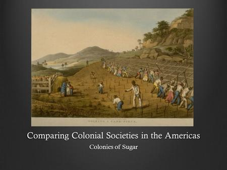 Comparing Colonial Societies in the Americas Colonies of Sugar.