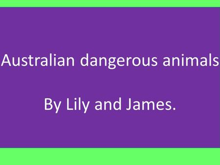 Australian dangerous animals By Lily and James.. No it is not hard living in Australia with all these dangerous animals and insects, but these are some.