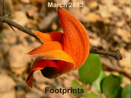 Footprints March 2013. A little Madness in the Spring Is wholesome even for the King... Some refer to the season of spring as a rebirth, a reawakening.