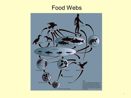 1 Food Webs Chapter 17. 2 Community Webs Summerhayes and Elton studied feeding relations on Bear Island in High Arctic.  Primary producers were terrestrial.