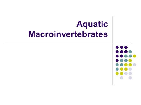 Aquatic Macroinvertebrates. What are Aquatic Macroinvertebrates? Macroinvertebrates are small organisms that do not have a backbone. A great diversity.