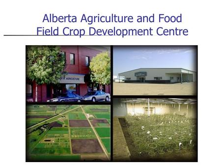 Alberta Agriculture and Food Field Crop Development Centre.