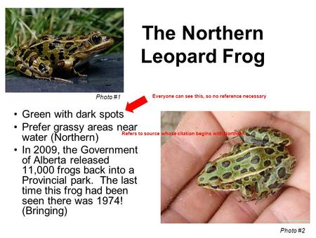 The Northern Leopard Frog Green with dark spots Prefer grassy areas near water (Northern) In 2009, the Government of Alberta released 11,000 frogs back.