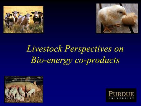 Livestock Perspectives on Bio-energy co-products.