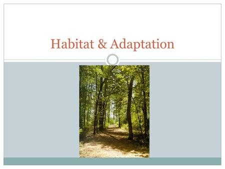 Habitat & Adaptation. Habitat The environment in which a specific species lives in. Example : Canadian beavers live in the wetlands and lakes of North.