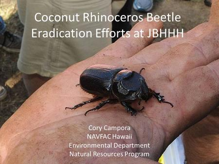 Coconut Rhinoceros Beetle Eradication Efforts at JBHHH Cory Campora NAVFAC Hawaii Environmental Department Natural Resources Program.