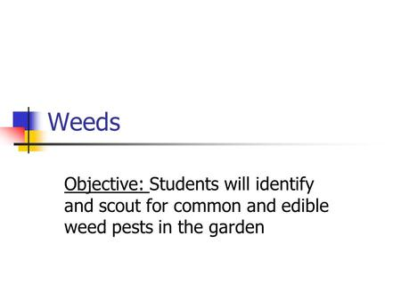 Weeds Objective: Students will identify and scout for common and edible weed pests in the garden.