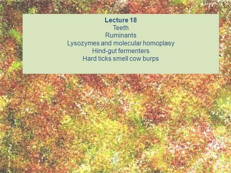 Lecture 18 Teeth Ruminants Lysozymes and molecular homoplasy Hind-gut fermenters Hard ticks smell cow burps.