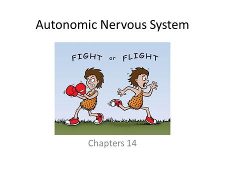 Autonomic Nervous System Chapters 14. Autonomic Nervous System (ANS) The ANS consists of motor neurons that: – Innervate smooth and cardiac muscle and.