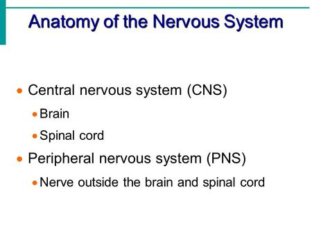 Anatomy of the Nervous System  Central nervous system (CNS)  Brain  Spinal cord  Peripheral nervous system (PNS)  Nerve outside the brain and spinal.