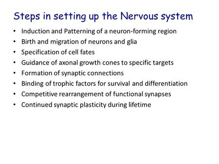 Steps in setting up the Nervous system Induction and Patterning of a neuron-forming region Birth and migration of neurons and glia Specification of cell.