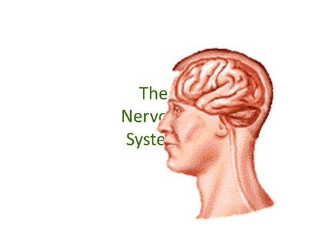 The Nervous System. The Central Nervous System The Central Nervous System processes all of the body's information. The two parts of the central nervous.