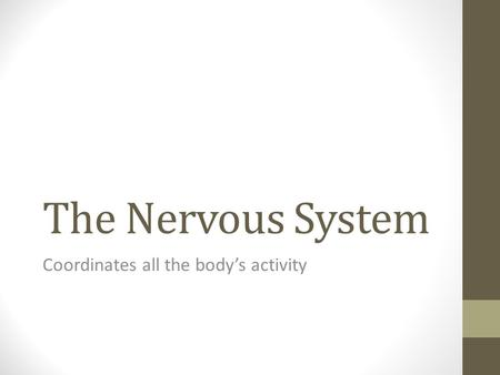 The Nervous System Coordinates all the body's activity.