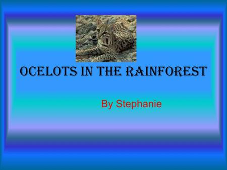 Ocelots in the Rainforest By Stephanie. Introduction Rainforests in the world are important to us. There are four layers in the rainforests. They're all.