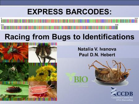 Natalia V. Ivanova Paul D.N. Hebert EXPRESS BARCODES: Racing from Bugs to Identifications.