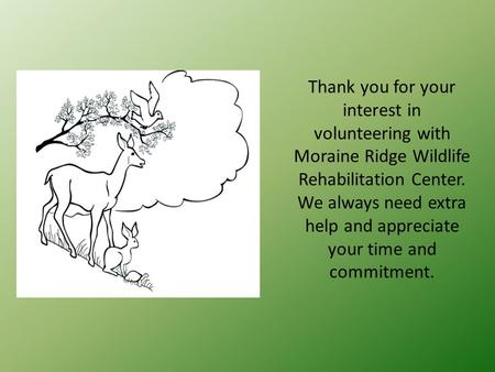 Thank you for your interest in volunteering with Moraine Ridge Wildlife Rehabilitation Center. We always need extra help and appreciate your time and commitment.