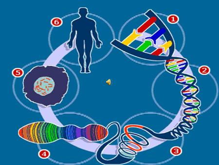 The Human Genome Project And It's Impact on the 21 st century Made by RA-A Made by RA-A.