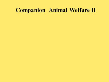 Companion Animal Welfare II. PROBLEMATIC PROCEDURES Ear cropping De-clawing Tail docking.