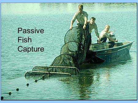 Passive Fish Capture.