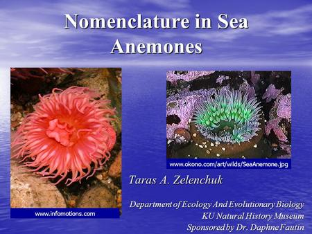 Nomenclature in Sea Anemones Taras A. Zelenchuk Taras A. Zelenchuk Department of Ecology And Evolutionary Biology KU Natural History Museum Sponsored by.