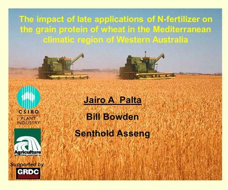 The impact of late applications of N-fertilizer on the grain protein of wheat in the Mediterranean climatic region of Western Australia Jairo A Palta Bill.