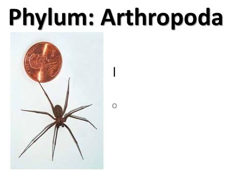 L o Phylum: Arthropoda Phylum: Arthropoda. l o Arthropoda Origin of the word Arthropoda: Jointed Foot Common Examples: Insects, Spiders, Crabs Symmetry: