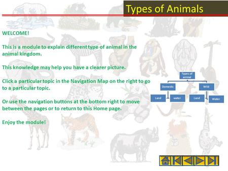Types of Animals WELCOME! This is a module to explain different type of animal in the animal kingdom. This knowledge may help you have a clearer picture.