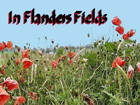 In Flanders Fields... the poppies grow.... between the crosses, row on row...