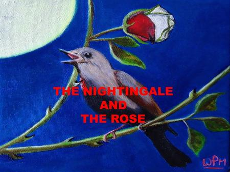 THE NIGHTINGALE AND THE ROSE.