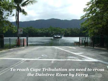 To reach Cape Tribulation we need to cross the Daintree River by Ferry.