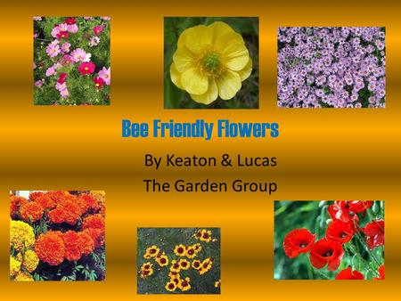 Bee Friendly Flowers By Keaton & Lucas The Garden Group.